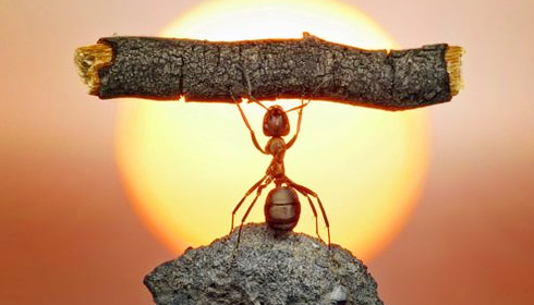 Self - Confidence - Ant